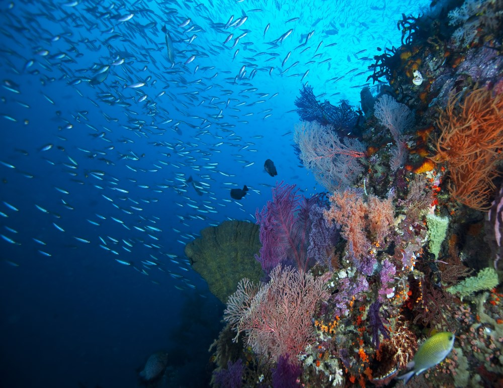 Raja Ampat is in the centre of the Coral Triangle, and part of the Birds Head Seascape.