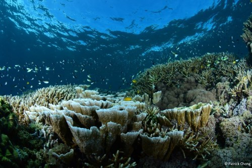 Coral heaven.
