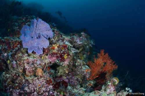 Colourful corals at Mid Reef.