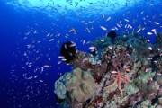 Beautiful pristine corals