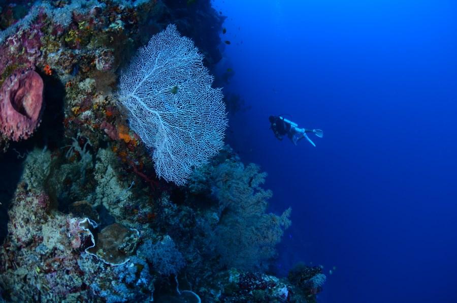 Pristine soft and hard corals at Fantasy Wall