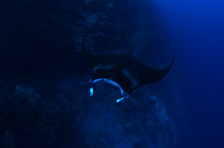 Sometimes manta rays can be spotted at Fantasy Wall too