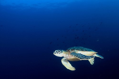 Turtles move so clumsy on land. But underwater, they are so graceful.