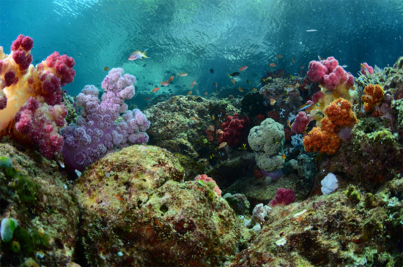Pristine and wide variety of corals and sealife.
