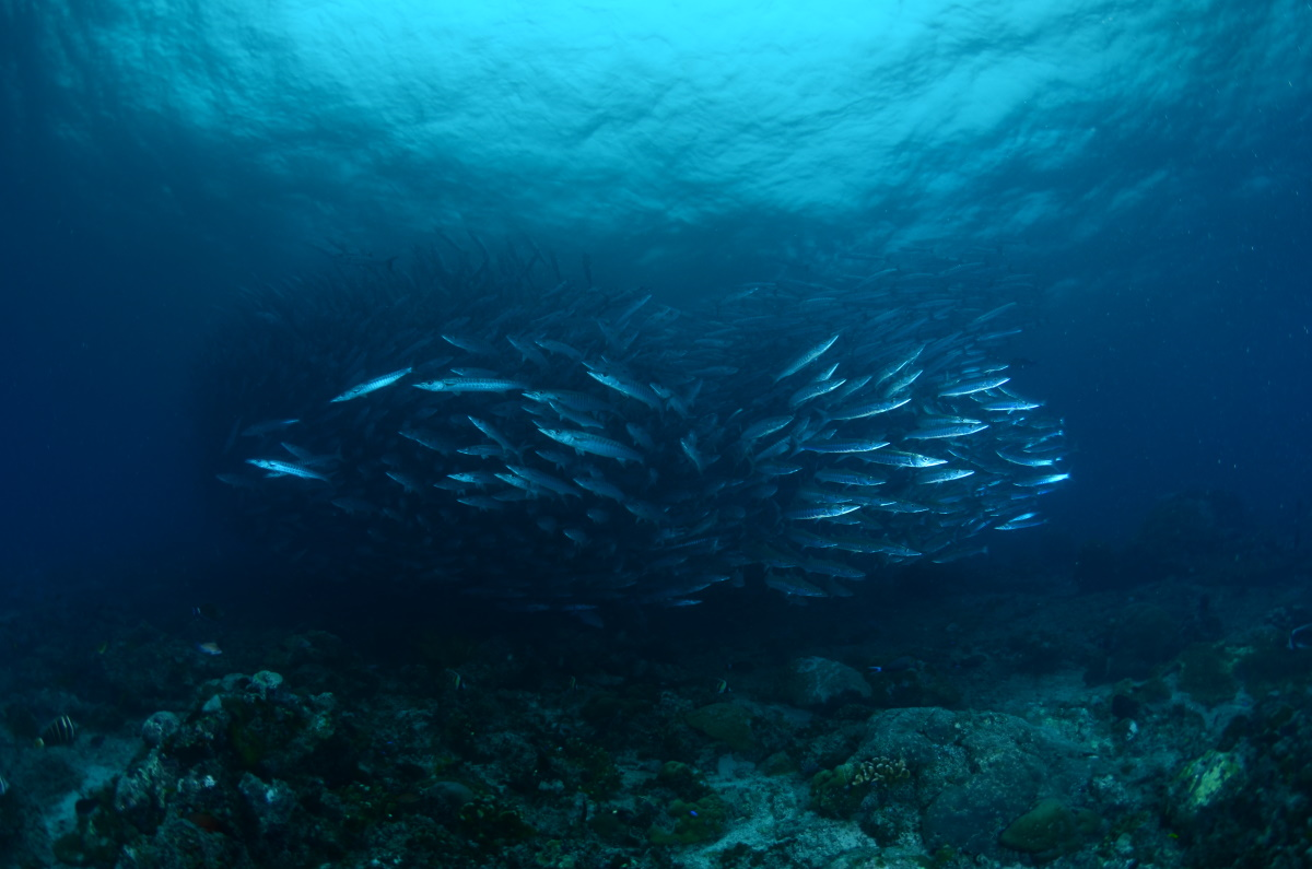 Chevron Barracudas, The Channel. © Patrick Chong